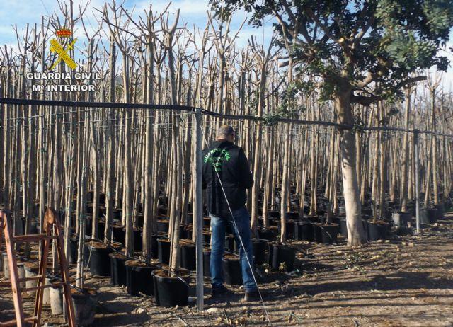 La Guardia Civil detiene a cuatro personas por la sustracción de seis mil árboles ornamentales en una finca de Cieza
