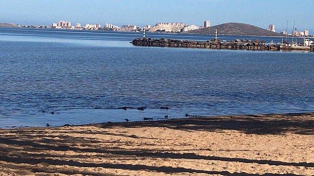 Así limpian minuciosamente las playas del Mar Menor - 5, Foto 5