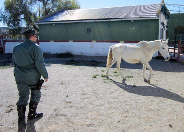 La Guardia Civil investiga a cinco personas por delitos de maltrato y abandono animal de varios equinos, Foto 2