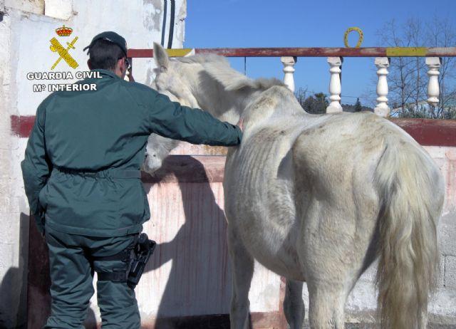 La Guardia Civil investiga a cinco personas por delitos de maltrato y abandono animal de varios equinos, Foto 3