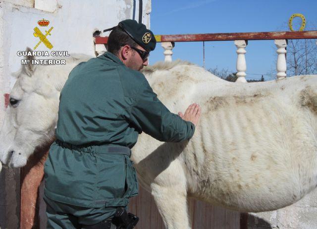 La Guardia Civil investiga a cinco personas por delitos de maltrato y abandono animal de varios equinos, Foto 4