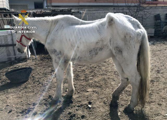La Guardia Civil investiga a cinco personas por delitos de maltrato y abandono animal de varios equinos, Foto 7