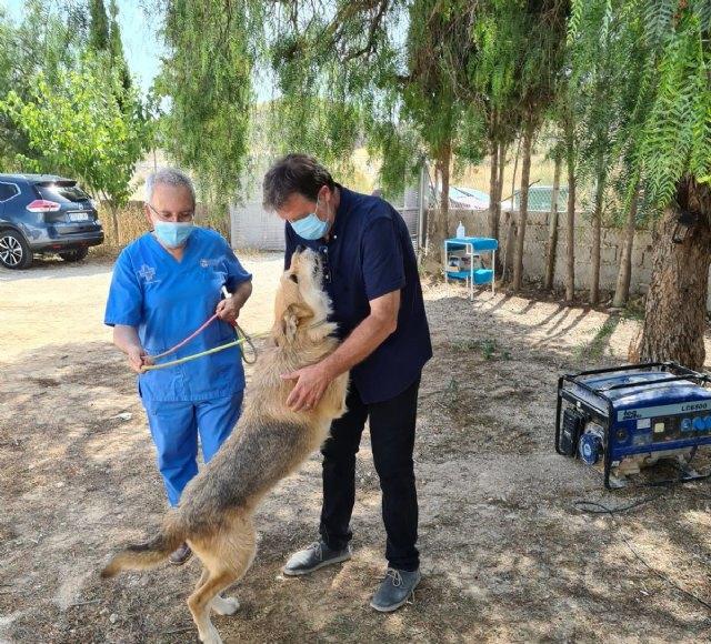 Saorín: Las mascotas vuelven al centro de acogida de animales - 1, Foto 1