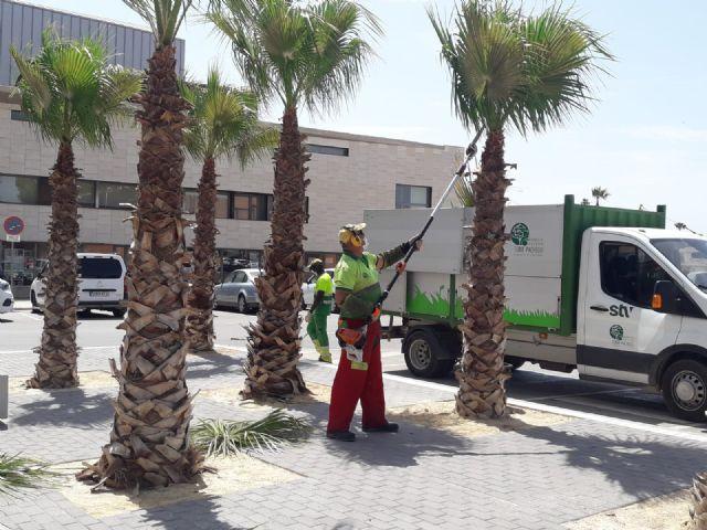 El servicio de jardines de STV Gestión pone en marcha la poda de 445 palmeras en los parques y calles de Torre Pacheco - 1, Foto 1