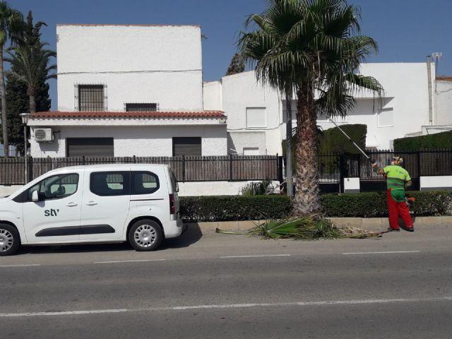 El servicio de jardines de STV Gestión pone en marcha la poda de 445 palmeras en los parques y calles de Torre Pacheco - 2, Foto 2