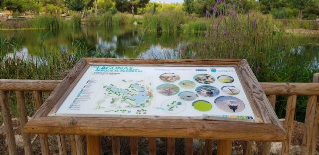 Hidrogea muestra al alcalde Luengo el parque inundable de la laguna de La Mata como solución a la llegada de aguas pluviales al Mar Menor en los periodos de fuertes lluvias - 4, Foto 4