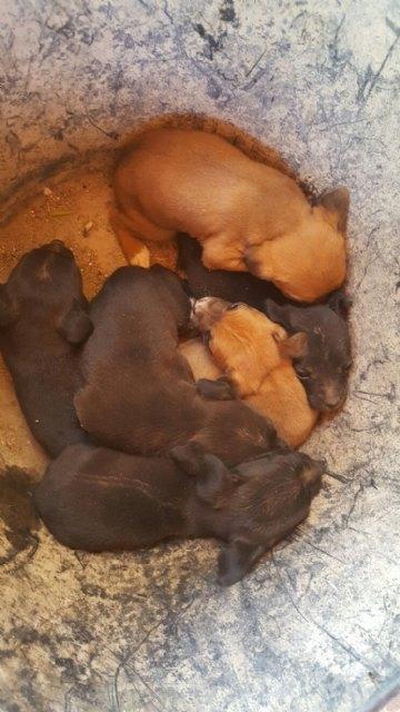 El pasado mes de Junio miembros de las peñas Eclipse y Chapas hallaron en un contenedor una camada de cachorros abandonados, Foto 1