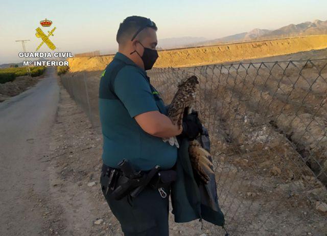 La Guardia Civil rescata en una finca de Ulea a un búho real herido - 2, Foto 2