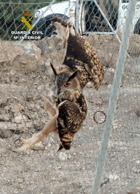 La Guardia Civil rescata en una finca de Ulea a un búho real herido - 3, Foto 3