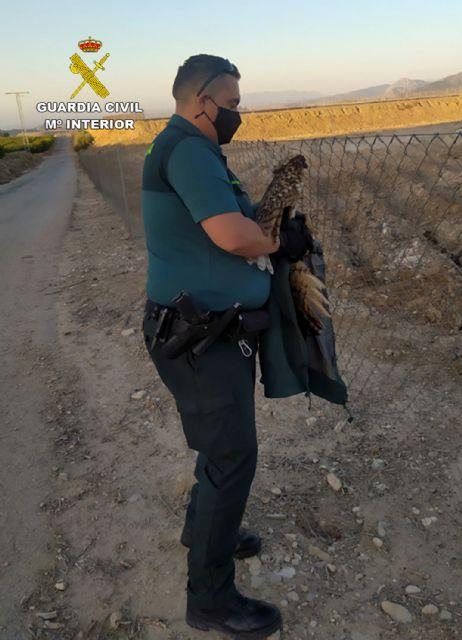 La Guardia Civil rescata en una finca de Ulea a un búho real herido - 5, Foto 5