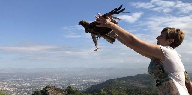 El Centro de Recuperación de Fauna Silvestre trata a una docena de águilas en lo que va de año, Foto 2