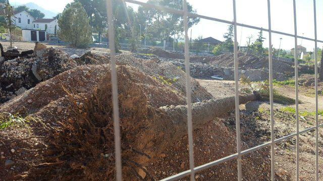 Ahora Murcia denuncia el corte de palmeras en una urbanización de nuevo desarrollo en la fuensanta - 2, Foto 2