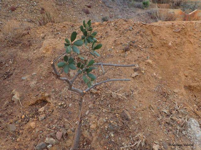 Denuncian la poda salvaje e innecesaria de un grupo de árboles autóctonos protegidos - 3, Foto 3