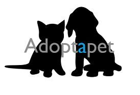 Adoptapet, una segunda oportunidad para animales abandonados - 1, Foto 1