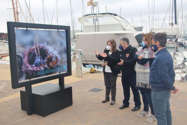 Ecodenuncia muestra en el puerto Marina de Las Salinas los efectos de la basura en los fondos marinos - 1, Foto 1