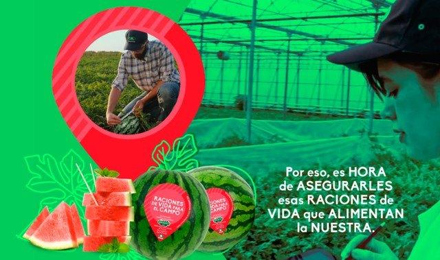 """Anecoop y sus sandías bouquet dan """"raciones de vida para el campo"""" - 1, Foto 1"""