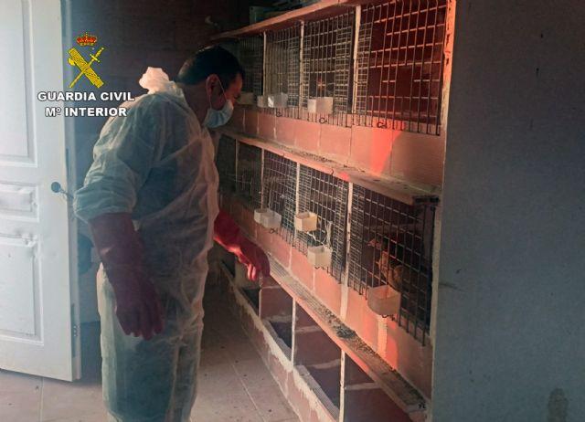 La Guardia Civil desmantela en Totana un tentadero ilegal dedicado a peleas de gallos - 3, Foto 3