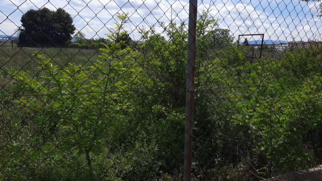 ¿Por qué el ayuntamiento tiene los solares municipales totalmente abandonados? - 4, Foto 4