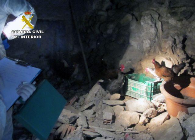 La Guardia Civil investiga a un vecino de Moratalla por abandono animal y tenencia ilícita de especies protegidas - 1, Foto 1