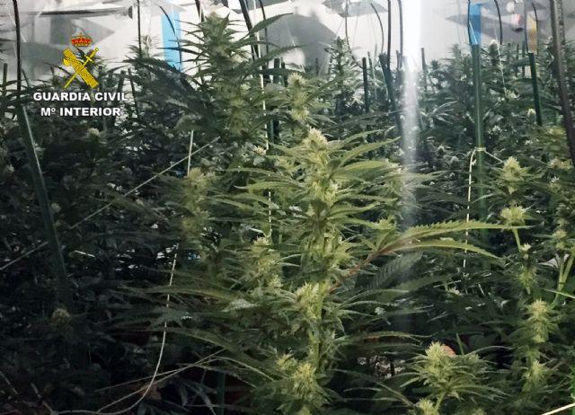 La Guardia Civil desmantela un invernadero clandestino de marihuana en Lorquí - 1, Foto 1