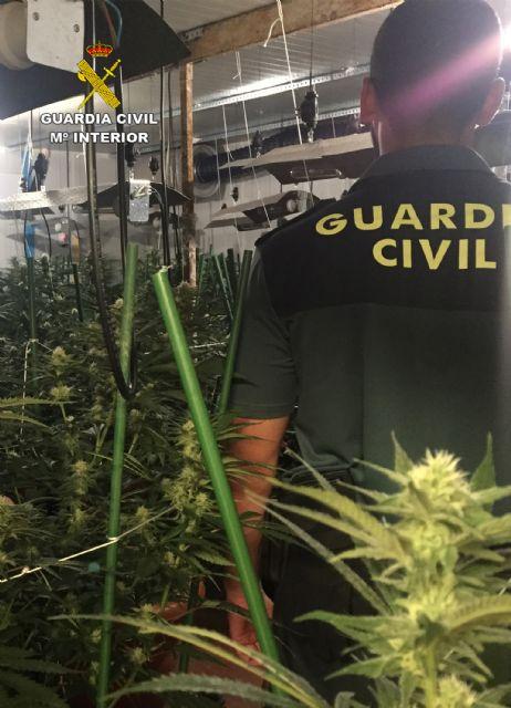 La Guardia Civil desmantela un invernadero clandestino de marihuana en Lorquí - 2, Foto 2