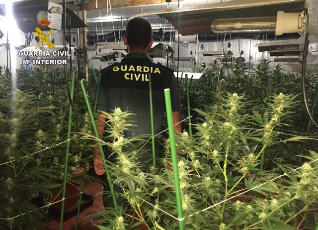 La Guardia Civil desmantela un invernadero clandestino de marihuana en Lorquí - 3, Foto 3
