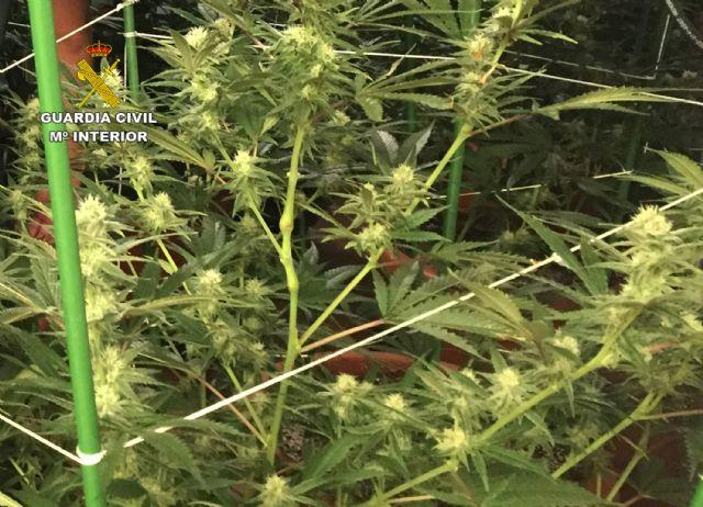 La Guardia Civil desmantela un invernadero clandestino de marihuana en Lorquí - 4, Foto 4