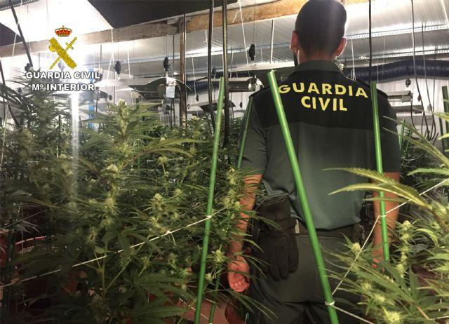 La Guardia Civil desmantela un invernadero clandestino de marihuana en Lorquí - 5, Foto 5
