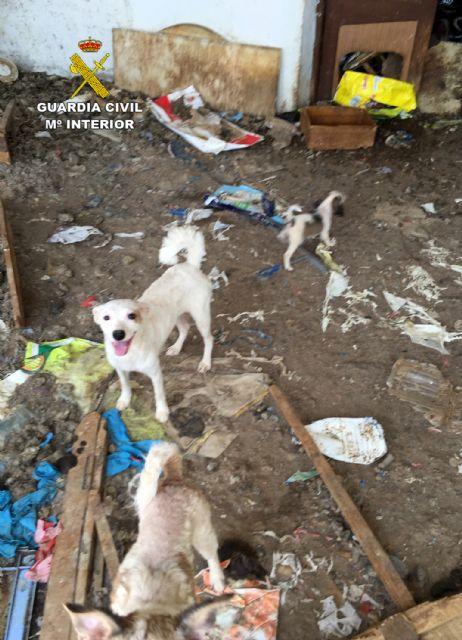 La Guardia Civil investiga a una vecina de Abanilla por delito de maltrato animal - 1, Foto 1