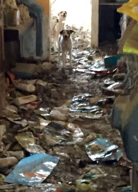 La Guardia Civil investiga a una vecina de Abanilla por delito de maltrato animal - 2, Foto 2