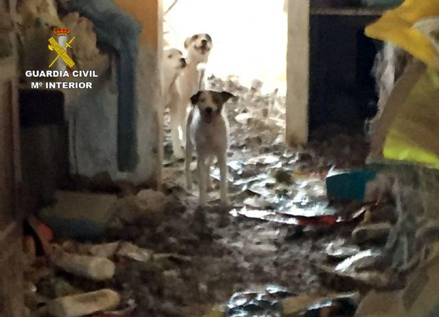 La Guardia Civil investiga a una vecina de Abanilla por delito de maltrato animal - 3, Foto 3