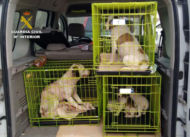 La Guardia Civil investiga a una vecina de Abanilla por delito de maltrato animal - 4, Foto 4