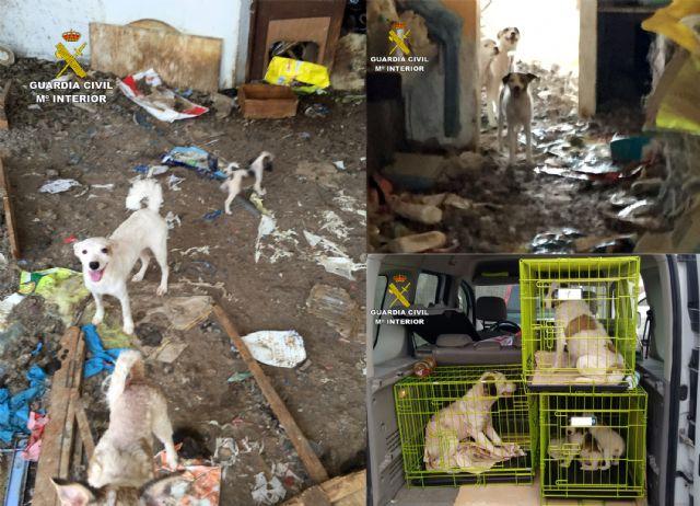 La Guardia Civil investiga a una vecina de Abanilla por delito de maltrato animal - 5, Foto 5