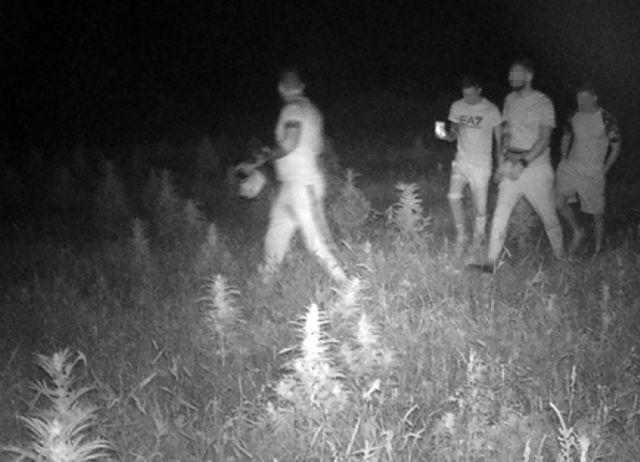 La Guardia Civil detiene a dos jóvenes por  la sustracción de cáñamo industrial en Caravaca de la Cruz - 1, Foto 1