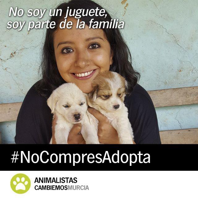 Cambiemos lanza la campaña ´No soy un juguete´ para fomentar la adopción de animales - 1, Foto 1
