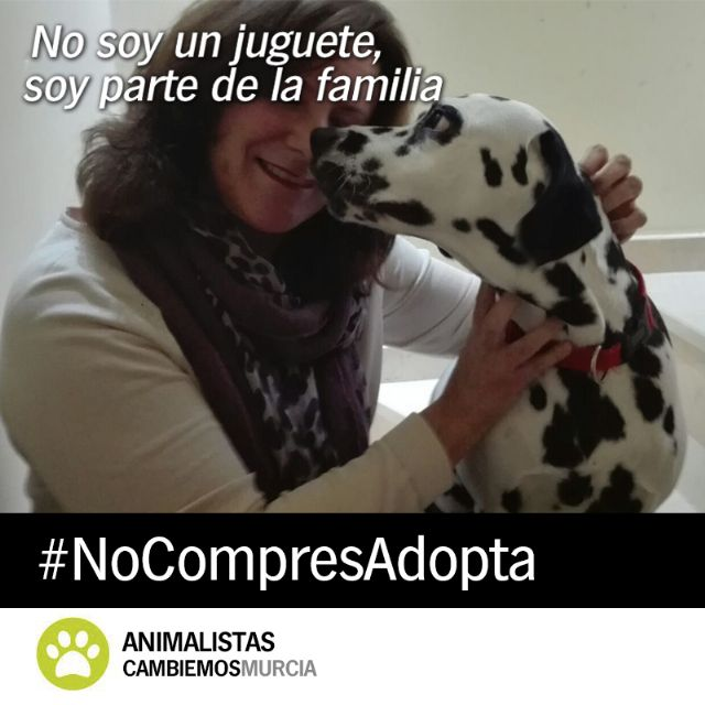 Cambiemos lanza la campaña ´No soy un juguete´ para fomentar la adopción de animales - 2, Foto 2