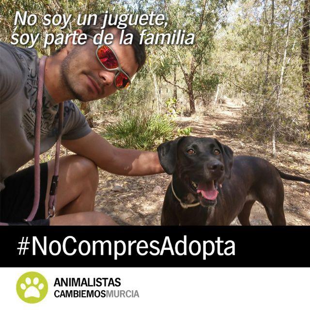 Cambiemos lanza la campaña ´No soy un juguete´ para fomentar la adopción de animales - 3, Foto 3