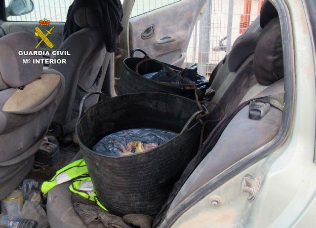 Intervienen más de medio centenar de kilos de pulpo de talla inferior a la mínima en Mazarrón - 1, Foto 1