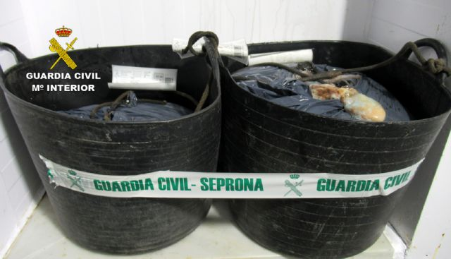 Intervienen más de medio centenar de kilos de pulpo de talla inferior a la mínima en Mazarrón - 5, Foto 5