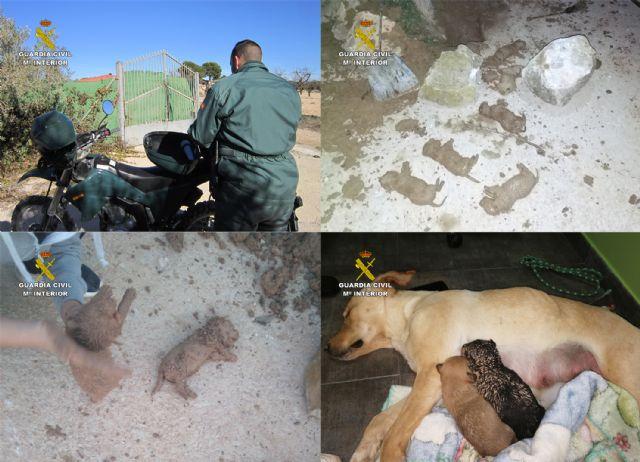 La Guardia Civil investiga a tres personas por sepultar vivos a nueve cachorros de una camada en una finca de Mula - 1, Foto 1