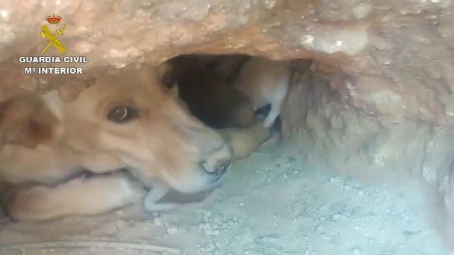 La Guardia Civil investiga a tres personas por sepultar vivos a nueve cachorros de una camada en una finca de Mula - 2, Foto 2