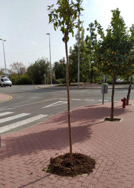 El Ayuntamiento de Murcia intensifica la campaña de reposición de arbolado con 800 ejemplares - 1, Foto 1