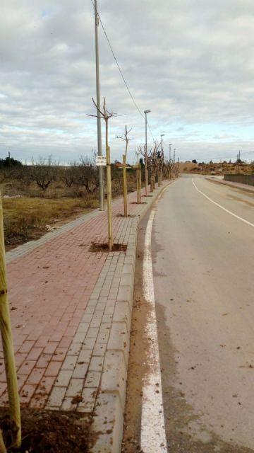 El Ayuntamiento de Murcia intensifica la campaña de reposición de arbolado con 800 ejemplares - 2, Foto 2