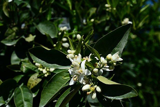 [En diálogo con los aromas del azahar, Foto 1