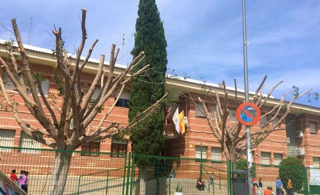 El Ayuntamiento se ve obligado a podar dos ficus del colegio El Parque por motivos de seguridad - 1, Foto 1