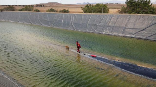 Bomberos del CEIS rescatan a un perro que había caído a una balsa de riego, en Alhama - 1, Foto 1