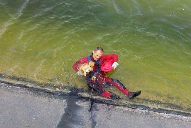 Bomberos del CEIS rescatan a un perro que había caído a una balsa de riego, en Alhama - 2, Foto 2