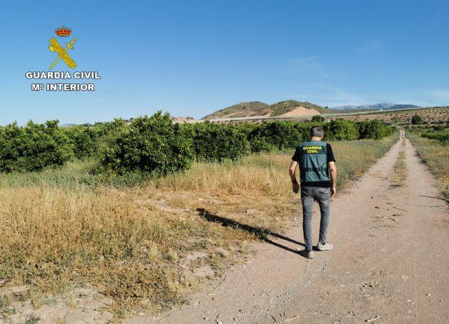 La Guardia Civil desmantela un grupo delictivo dedicado a la sustracción de cítricos en Alhama de Murcia, Foto 1