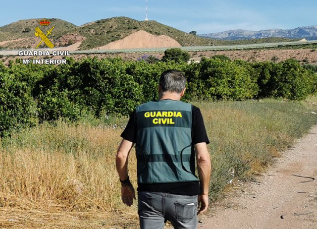 La Guardia Civil desmantela un grupo delictivo dedicado a la sustracción de cítricos en Alhama de Murcia, Foto 2