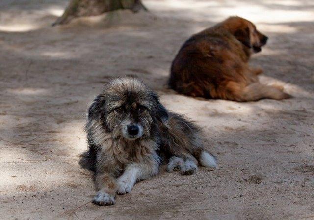 Prorrogan el servicio de recogida de animales abandonados, vagabundos o extraviados; y el transporte y gestión de animales muertos - 1, Foto 1